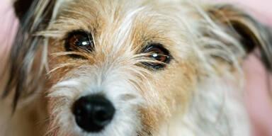 Herrchen rammt Hund Nagel in Schädel & gräbt ihn lebendig ein
