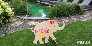 Thailand - IdT - Elefanten-News des Tages - Smiley-fant Pool relaxen