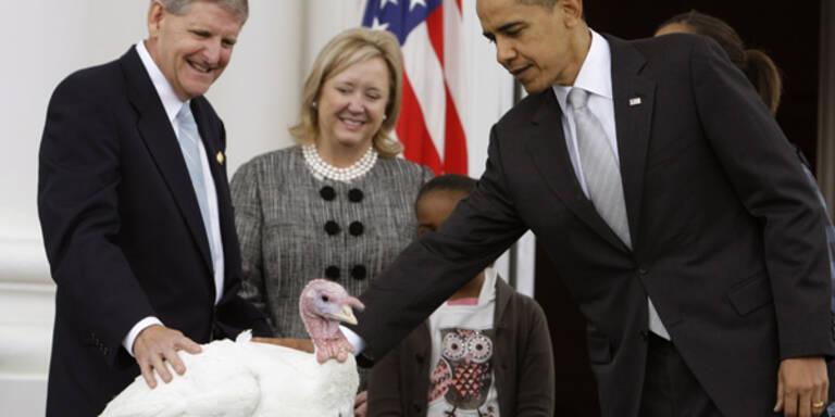 Thanksgiving - Obama hat ein Herz für Truthähne