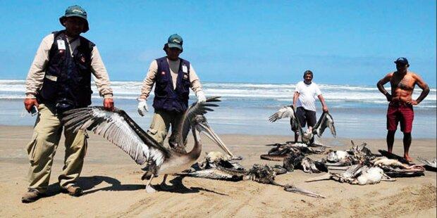 Rätsel um Tiersterben in Peru