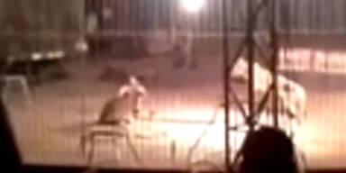 Mexiko: Tiger tötete Zirkusdompteur