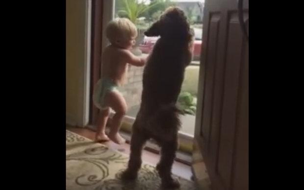 Warum freuen sich das Baby und sein Hund so?