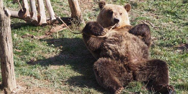 So glücklich sind die traurigsten Bären heute