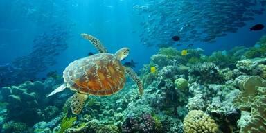 Tierisches Spektakel am Great Barrier Reef