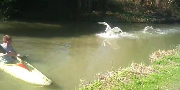 Aggressiver Schwan attackiert Kajak-Fahrer