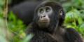 Uganda - ADV - ProBono - Header - Gorilla