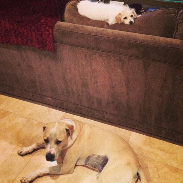 Kaley Cuocos Hunde Ruby & Norman