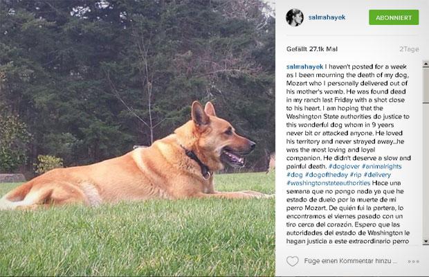 Salma Hayek trauert um ihren Hund