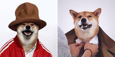 Hund als Fashion-Star auf Instagram
