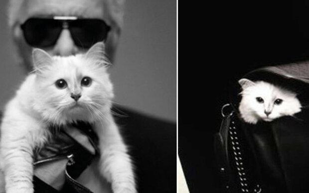 Lagerfelds Katze mit eigener Mini-Kollektion