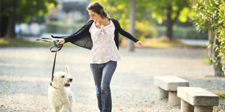 Hund schützt Frauchen vor Schlaganfall