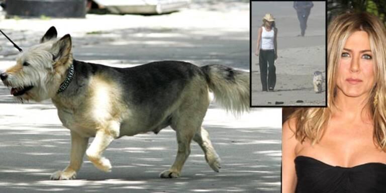 Jennifer Aniston trauert um ihren Hund