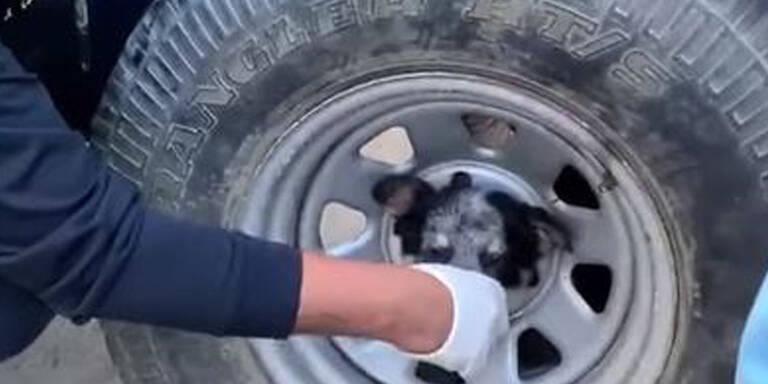 Floriani retten Hund aus misslicher Lage