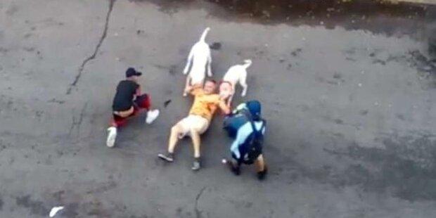 USA: Pitbull-Hunde zerfleischten Mann