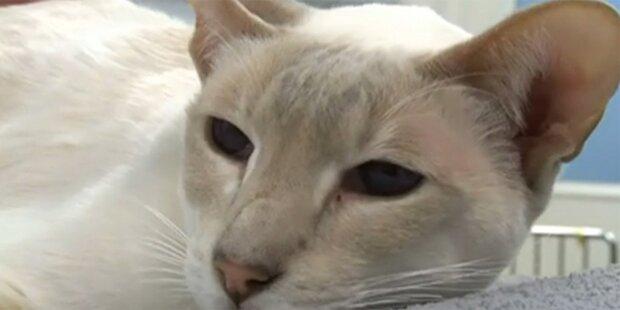 Katze überlebte 8 Tage in Paket