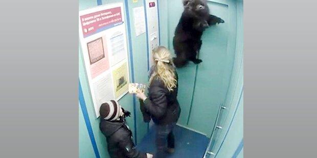 Hund im Aufzug beinahe erhängt