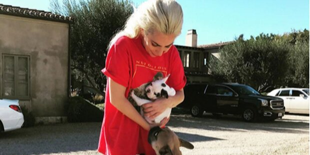 Lady Gaga: Süßer Familienzuwachs