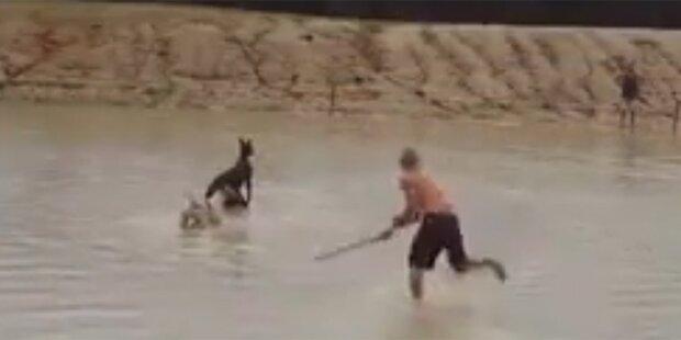 Weil er Hunger hatte: Mann prügelt Känguru zu Tode