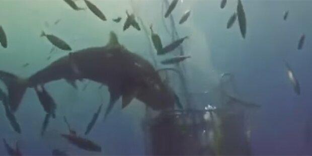 Das ist die ekelhafteste Hai-Attacke aller Zeiten