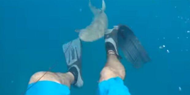 Taucher von Hai attackiert: Opfer filmt alles mit
