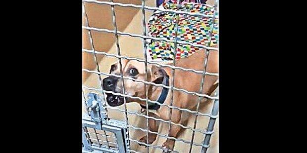 Böller-Attacke auf Straches Patenhund