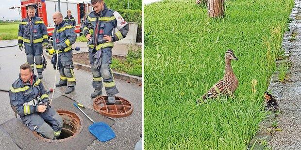 Feuerwehr rettet drei Entenküken aus Kanalschacht