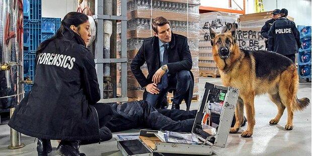 TV-Sensation: Comeback für ''Kommissar Rex''