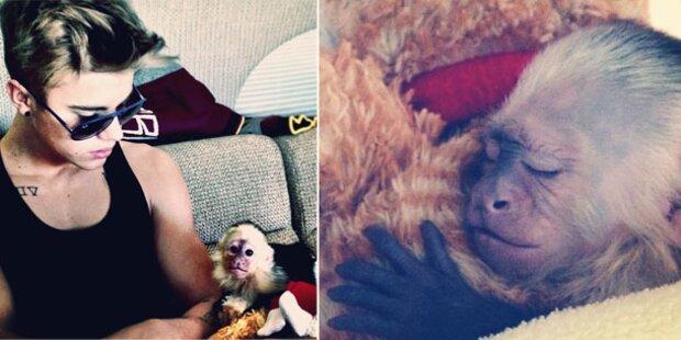 Justin Biebers Affe immer noch in Tierheim