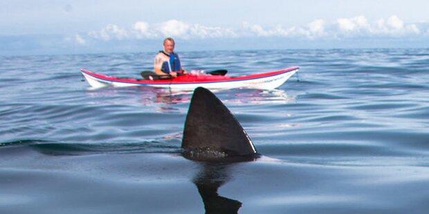 Hai-Alarm vor der britischen Küste