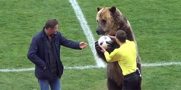 Braunbär für Fußballspiel missbraucht