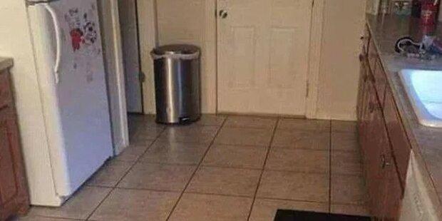 Auf diesem Foto versteckt sich ein Hund