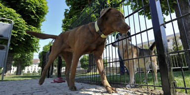 Tierhasser lockt Hunde mit Würstchen