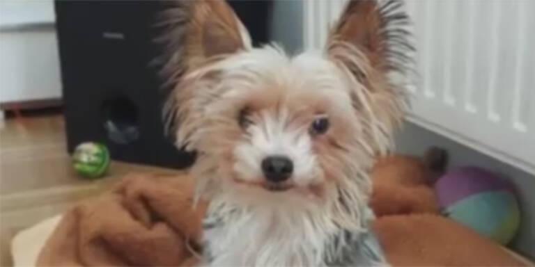 Hund in Wäschetrockner: Jagd auf irren Tierquäler