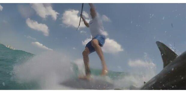 Video: Hai attackiert Stehpaddler