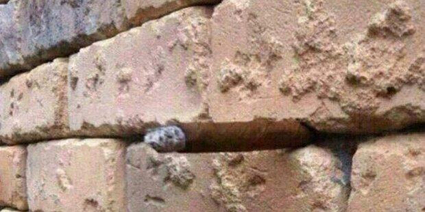 Erkennen Sie, was hier zu sehen ist?