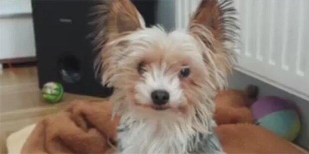 Hund in Wäschetrockner getötet: Besitzerin hat gelogen