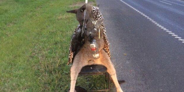 Wirbel um totes Känguru mit Ouzo-Flasche im Arm