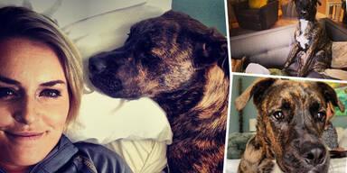 Lindsey Vonn: Instagram-Profil für Hund Leo