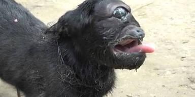 Ziege mit einem Auge geboren – jetzt wird sie als Gott verehrt