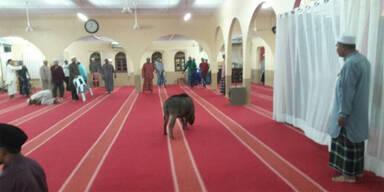 Wildschwein Moschee