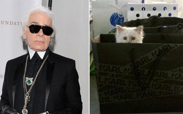 Die Augen seiner Katze sind seine Inspiration