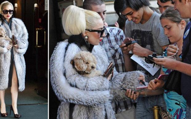 Lady Gaga ist PETAs neues Opfer