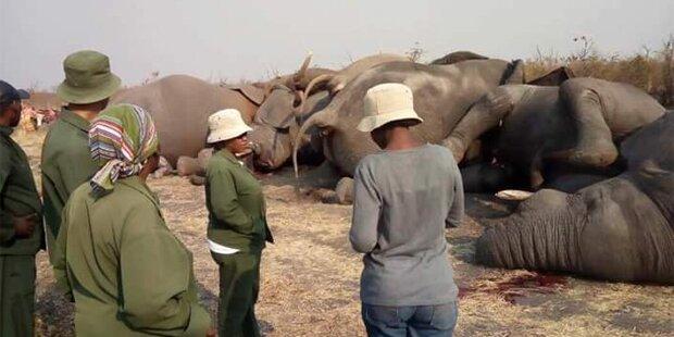 Stromschlag! Elefantenherde stirbt bei Flucht aus Wildpark