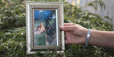 Erster infizierter Hund stirbt an Corona