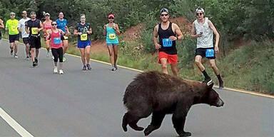 Hier flitzt ein Bär über eine Rennstrecke