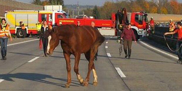 Pferd irrte nach Unfall auf der A2 umher