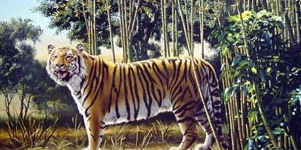 Erkennen Sie hier den versteckten Tiger?