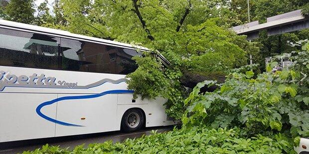 Bus von Baum getroffen - Mehrere Verletzte