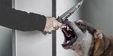 Hund Messer Attacke