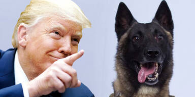 Trump Hund IS-Chef al-Baghdadi